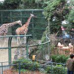 31歳男性の婚活パーティー体験談!私が参加した一風変わった婚活パーティーの会場は動物園でした。